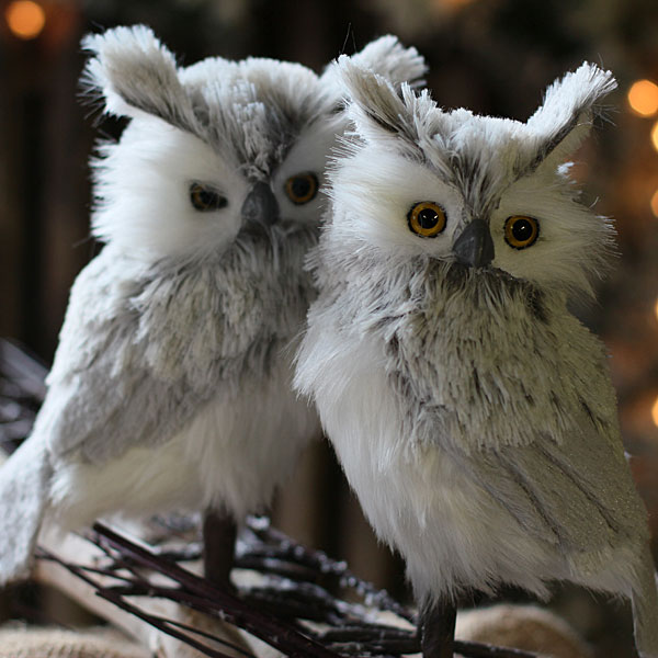 Cute Owl Photos Cute Owl Pictures Cute Owl Images Page 3 | Auto Design ...
